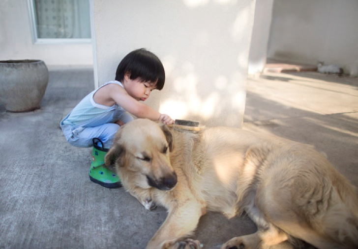 Asian 2 to 3 years old toddler boy grooming a big pet dog.