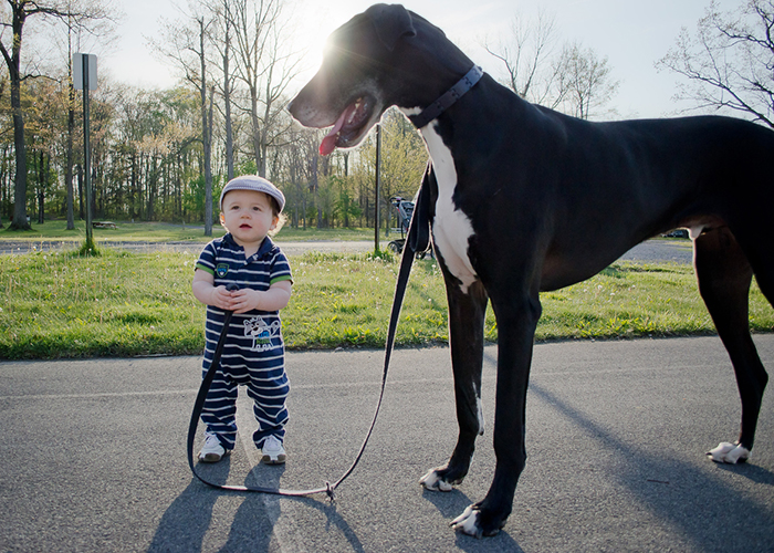 cute-big-dogs-and-babies-29
