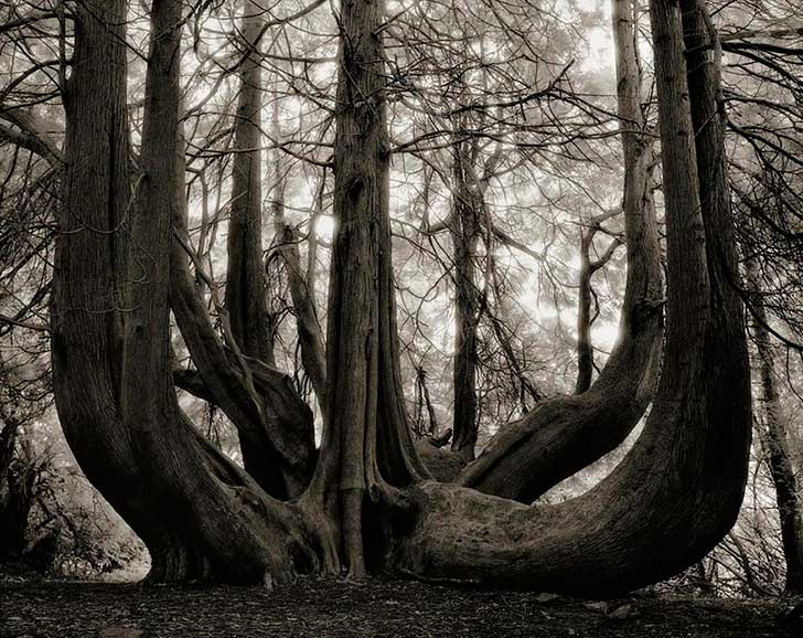 ancient-trees-beth-moon-14