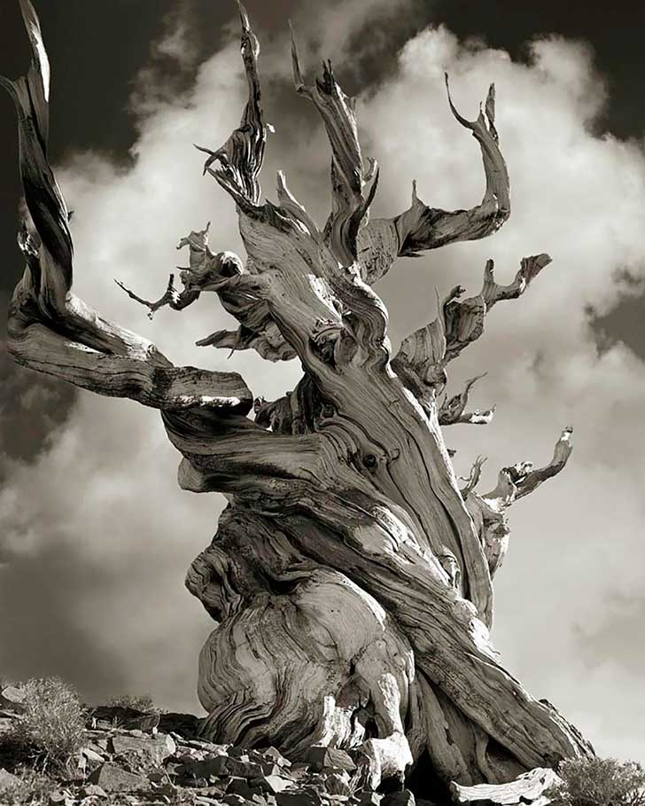 ancient-trees-beth-moon-15