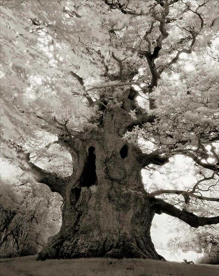 ancient-trees-beth-moon-16