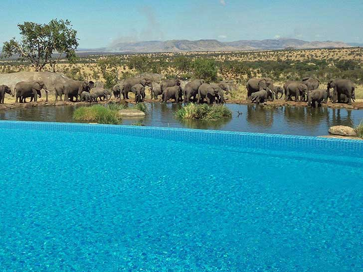 the-four-seasons-safari-lodge-serengeti-in-tanzania-lets-you-swim-while-watching-elephants-at-a-nearby-water-hole