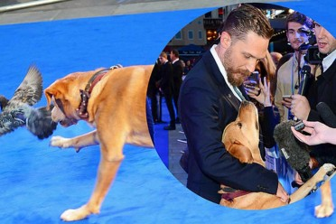 tom-hardy-took-his-dog-to-the-legend-premiere-and-2-24029-1441384937-17_dblbig