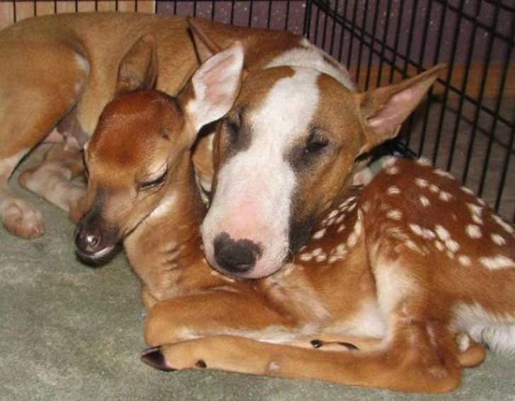 unlikely-sleeping-buddies-animal-friendship-161__605