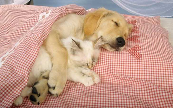 unlikely-sleeping-buddies-animal-friendship-44__605