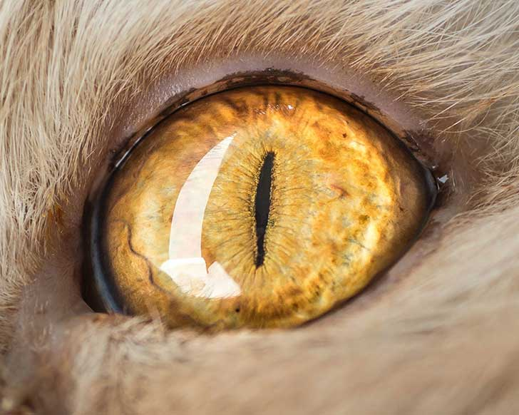 15-Macro-Shots-of-Cat-Eyes13__880