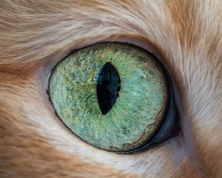 15-Macro-Shots-of-Cat-Eyes14__880