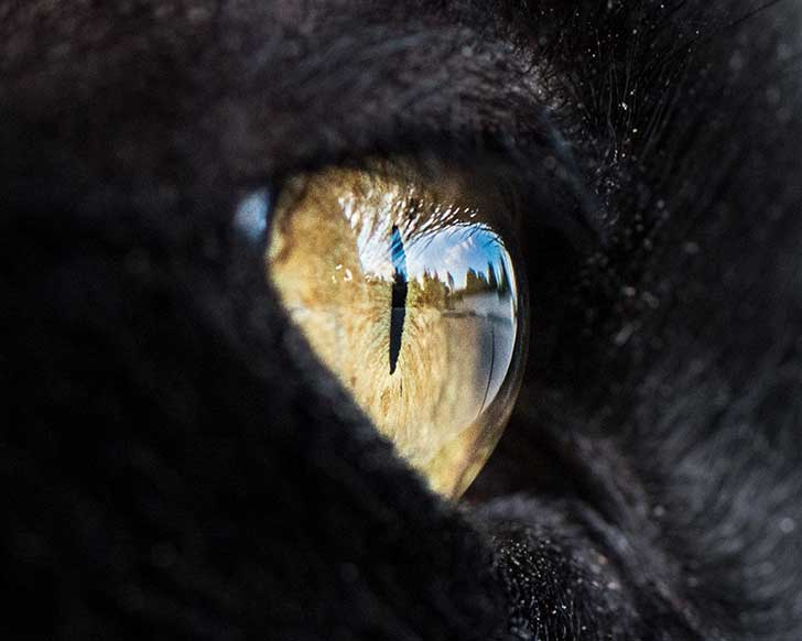 15-Macro-Shots-of-Cat-Eyes4__880