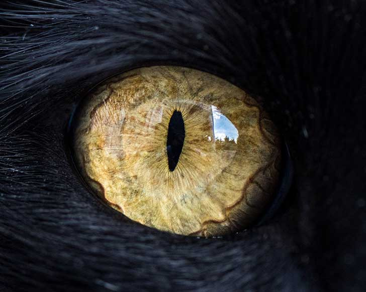15-Macro-Shots-of-Cat-Eyes5__880