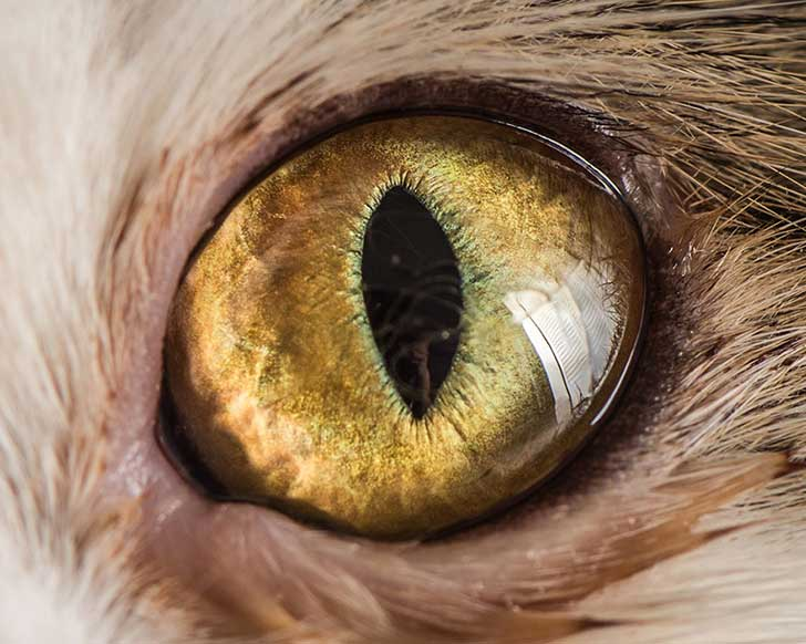 15-Macro-Shots-of-Cat-Eyes9__880