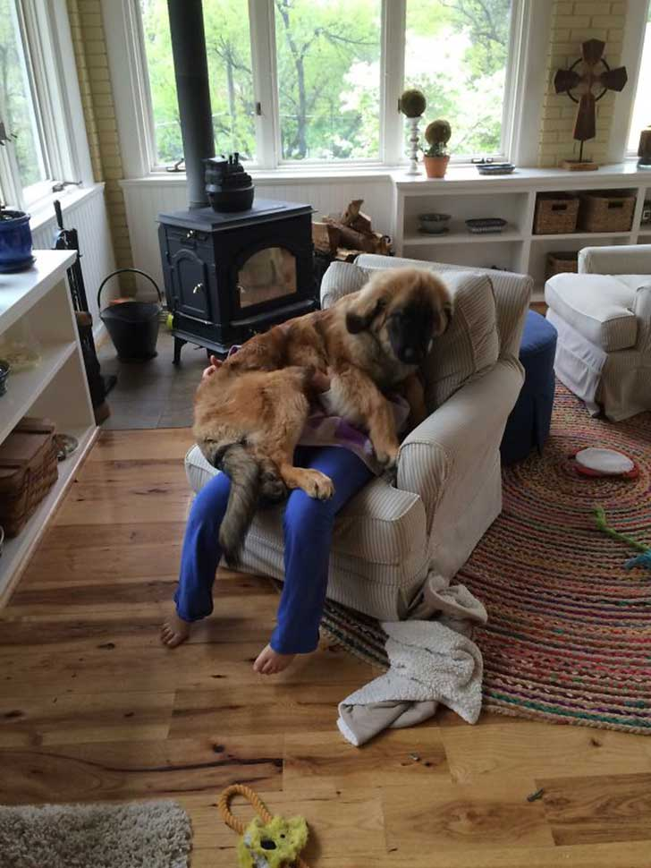 funny-dogs-violate-personal-space-241__605