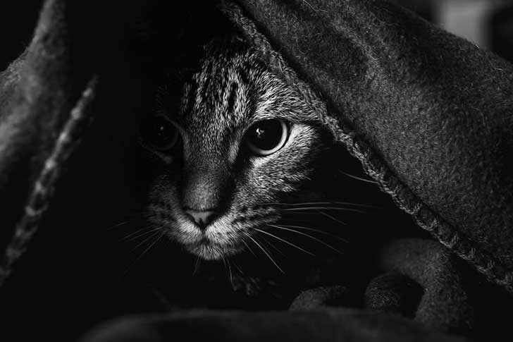 photographing-cats-helps-me-deal-with-my-insecurity-and-dark-past-7__880