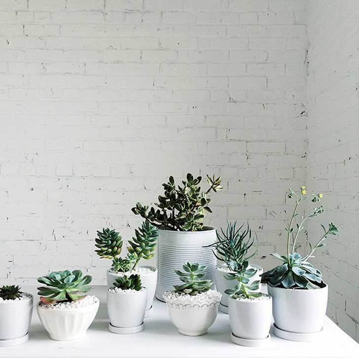 plants-home-decor-2
