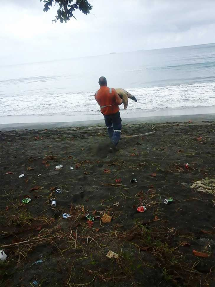 man-saves-sea-turtles-arron-culling-papua-new-guinea-6