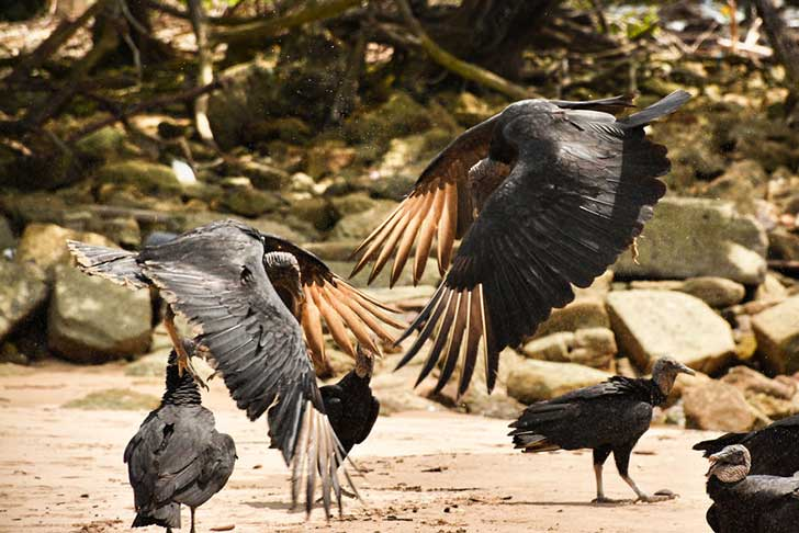 i-stood-next-to-these-amazing-birds-of-prey-and-photographed-them-to-tell-their-story-11__880