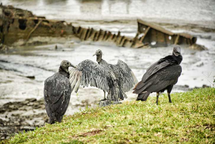 i-stood-next-to-these-amazing-birds-of-prey-and-photographed-them-to-tell-their-story-13__880