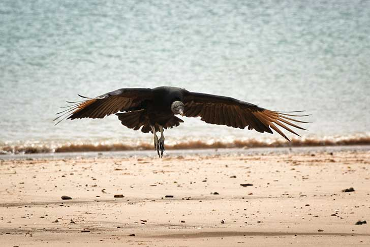 i-stood-next-to-these-amazing-birds-of-prey-and-photographed-them-to-tell-their-story-2__880