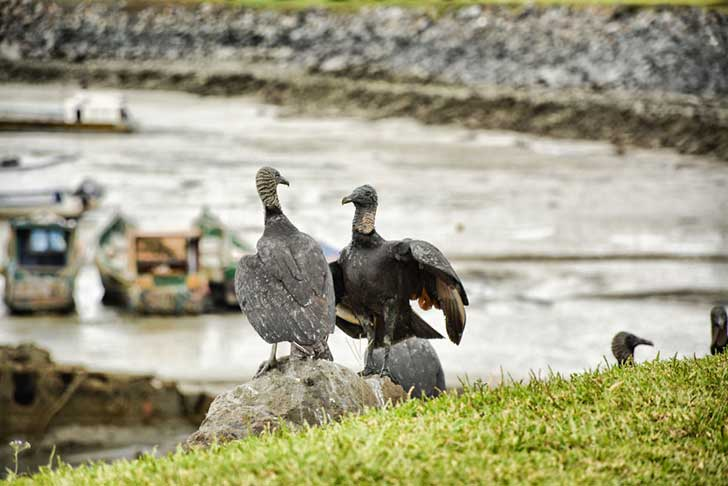 i-stood-next-to-these-amazing-birds-of-prey-and-photographed-them-to-tell-their-story-7__880