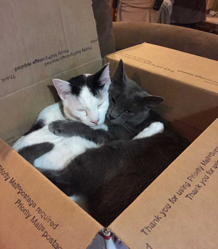cat-couples-valentines-day-12__605