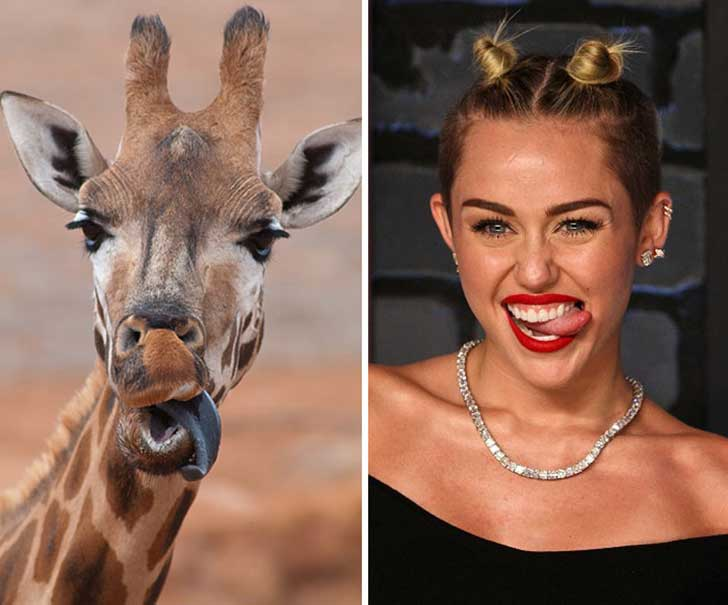 celebrity-look-alikes-animals-262__700