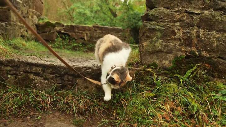 meet-stevie-the-blind-rescued-cat-who-loves-to-go-hiking-5__880