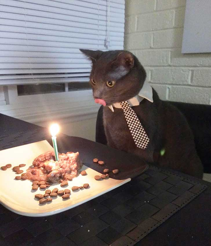 pets-that-have-better-birthday-parties-than-you-71-570f52c620377__700