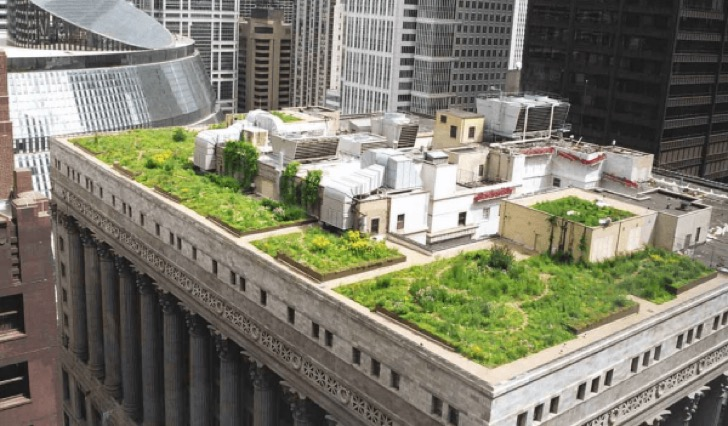 green-roofs-1