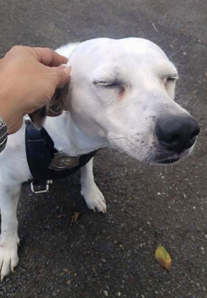 stray-dog-adopted-police-gorgi-bayamon-puerto-rico-1