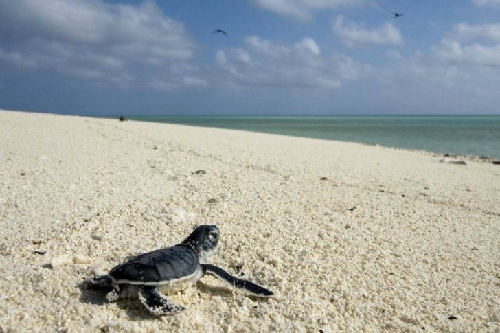 baby-green-turtle-in-tulum-mexican-caribbean