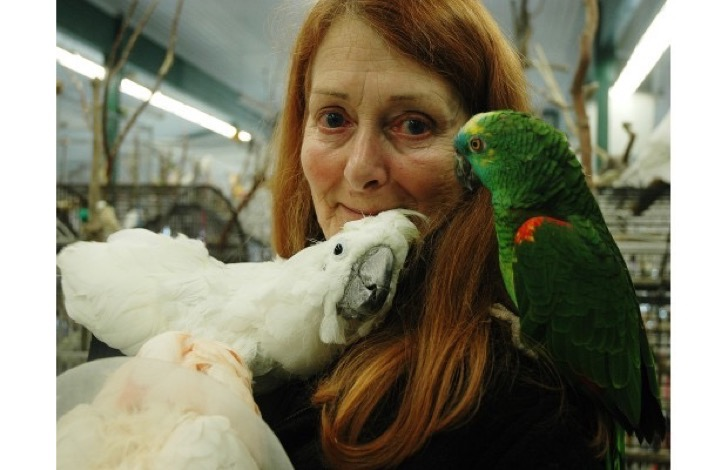 Nanaimo 03/09/08 - World Parrot Refuge co-founder Wendy Huntbatch, with several parrots on Tuesday.The centre desperatly needs funds. Danielle Bell/Daily News. FILE PHOTO Can be used with Judith Lavoie (Victoria Times Colonist). PARROT-ADDICTS