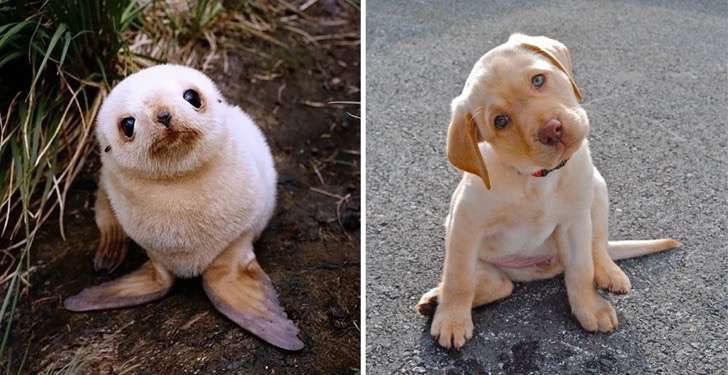 seals-look-like-dogs-8-574d4ee5d76bb__880 2
