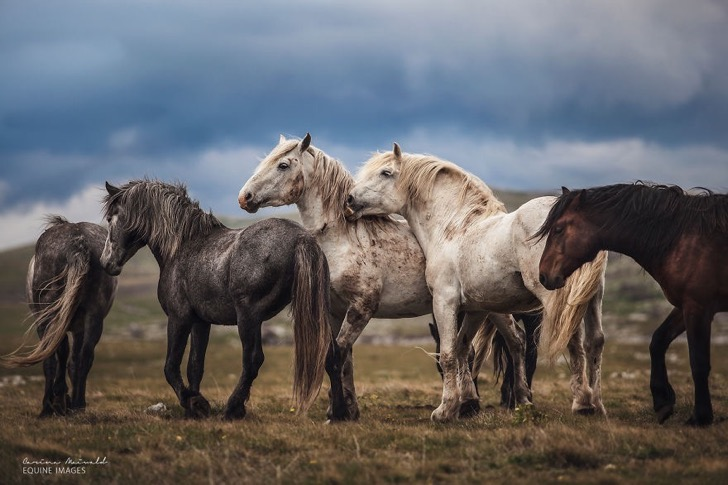 I-found-freedom-with-horses-576d2faabafd5__880