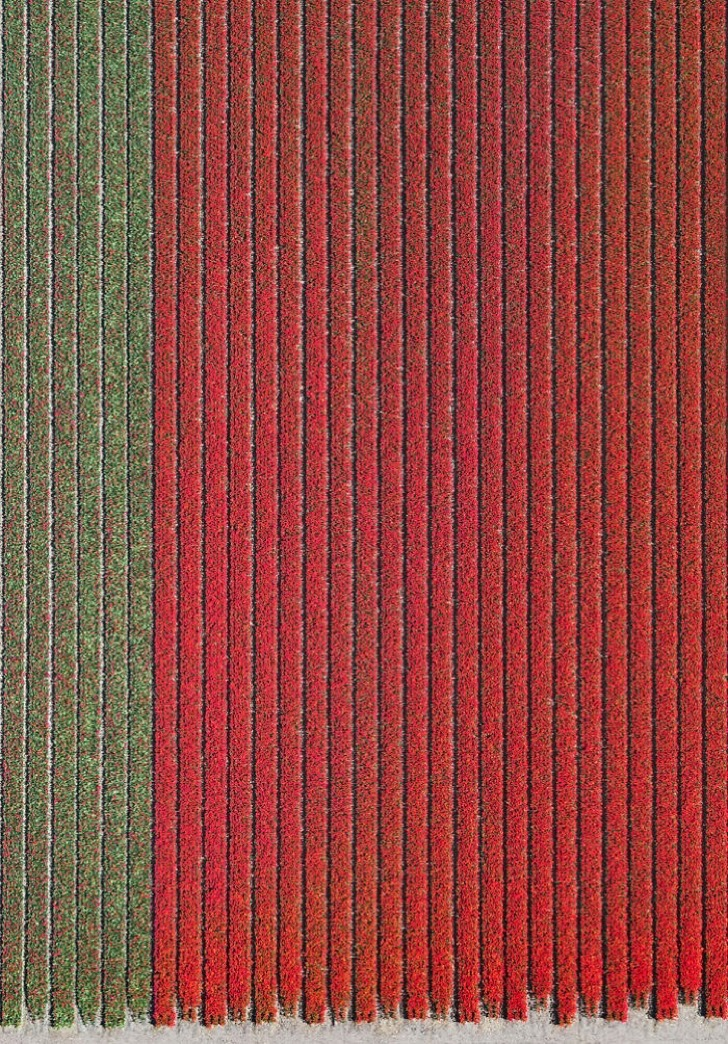 tulip-fields-aerial-photography-netherlands-bernhard-lang-5773d992470b3__700