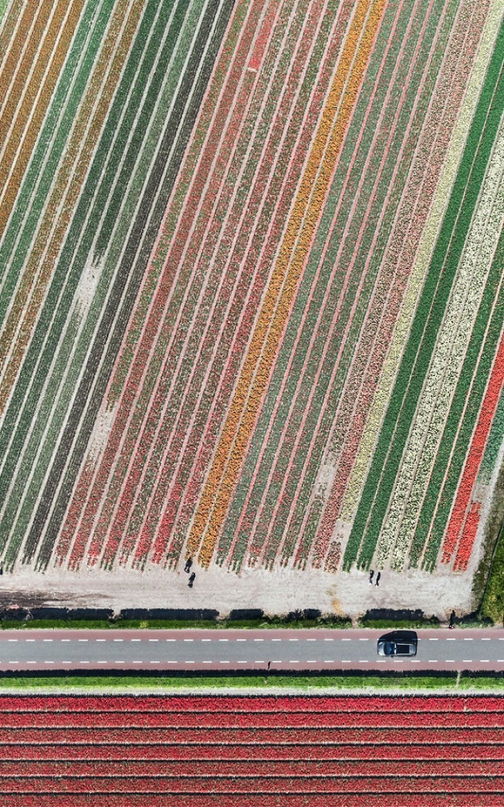 tulip-fields-aerial-photography-netherlands-bernhard-lang-5773d99746f83__700