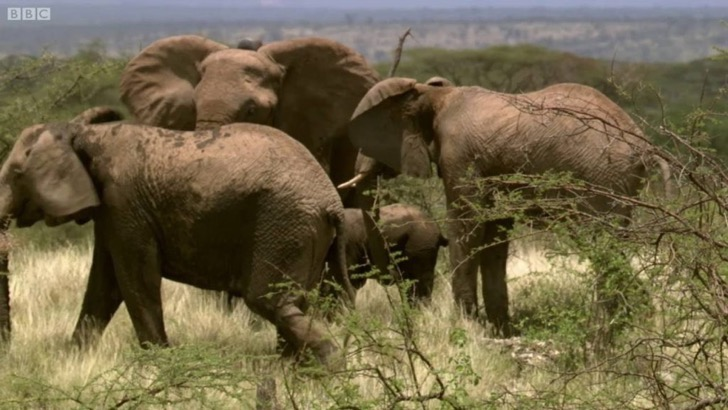 vet-keeps-dangerous-herd-of-elephants-at-bay-this-wild-life-bbc-1024x576