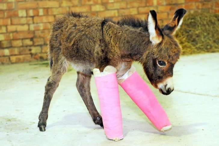 animals-in-tiny-casts-19-580093cdd2411__605-2