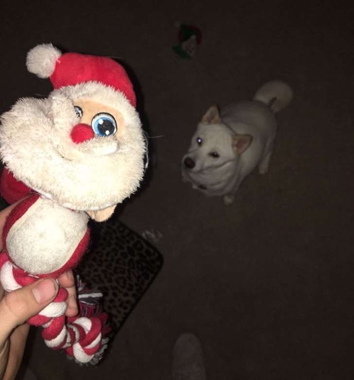 dog-toy-santa-mall-picture-kya-4-2