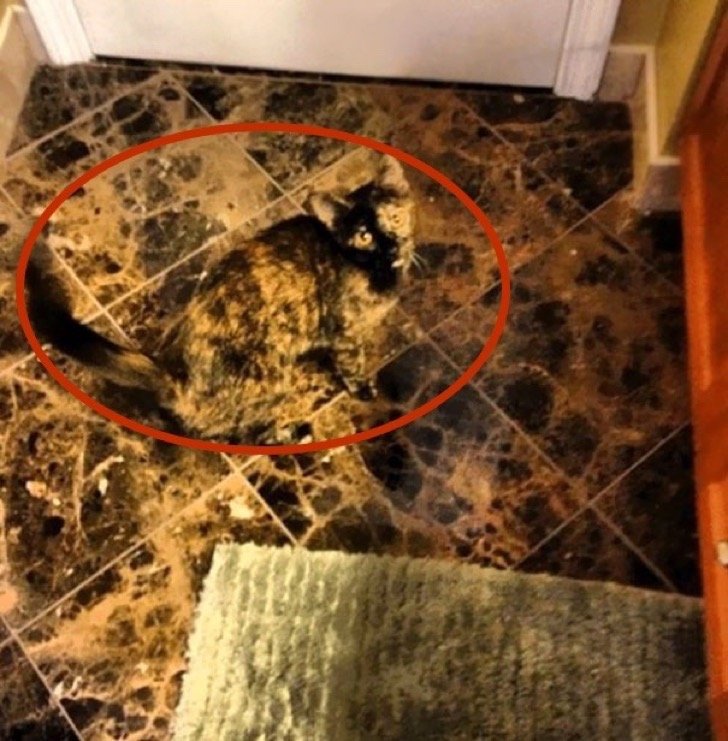 find-hidden-cat-camouflage-hide-and-seek-catouflage-118-5836a106009a1__605-copia
