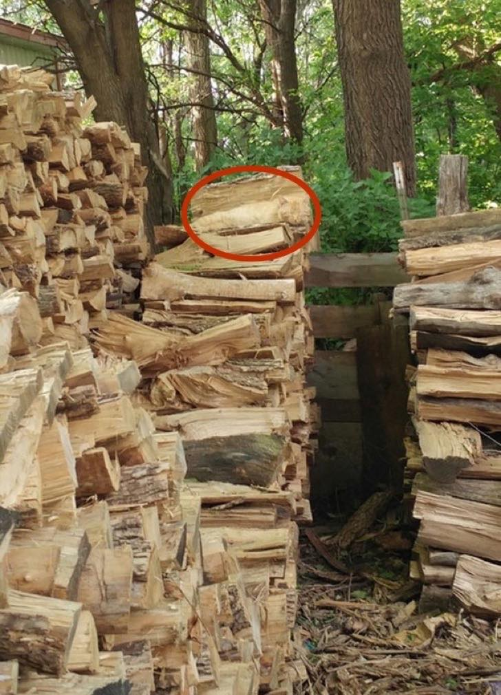 find-hidden-cat-camouflage-hide-and-seek-catouflage-44-copia