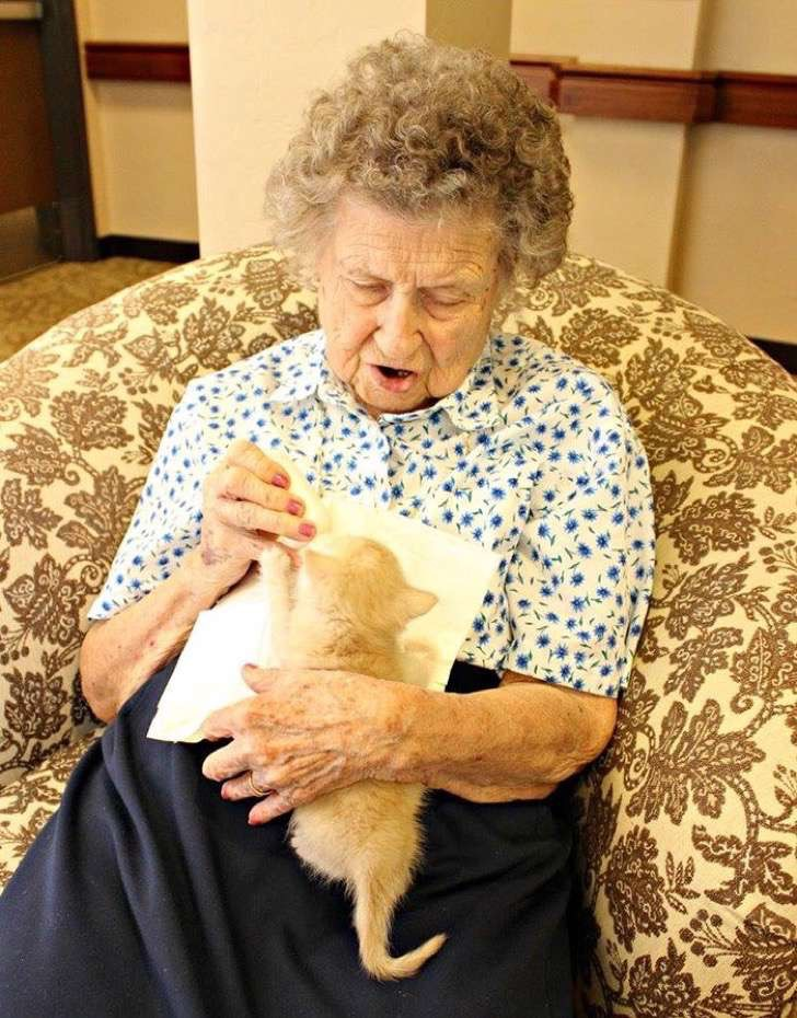 retirement-home-shelter-cats-1-2