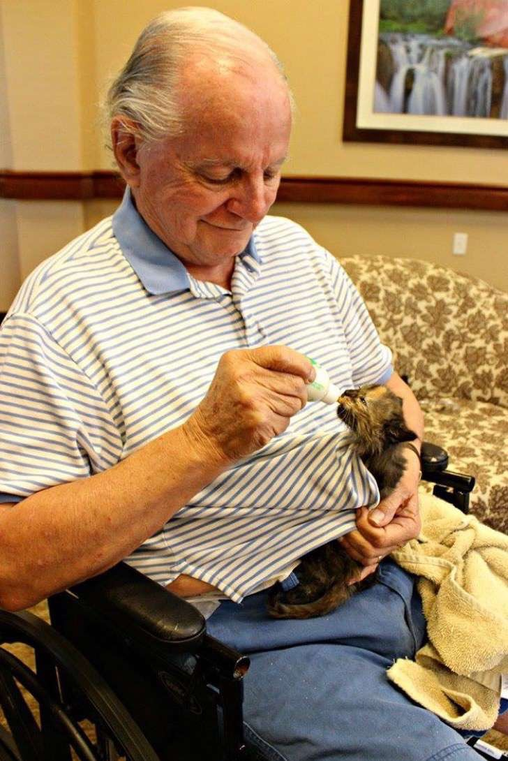 retirement-home-shelter-cats-4-2