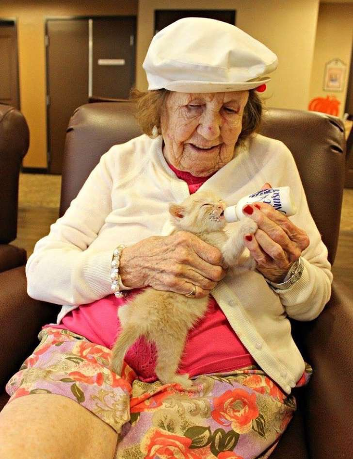 retirement-home-shelter-cats-5-2
