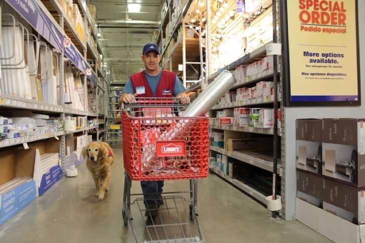 In this Nov. 22, 2016 photo, Charlotte follows Clay Luthy as he returns items to shelves at a Lowe's store in Abiline, Texas. U.S. Air Force veteran Clay Luthy and his service dog golden retriever, Charlotte, both wear red and blue Lowe's vests to work at the home improvement retailer. (Greg Jaklewicz/The Abilene Reporter-News via AP)