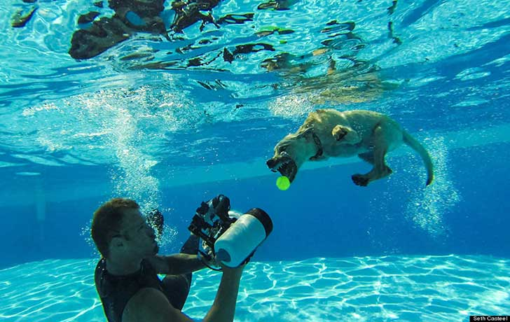 o-SETH-CASTEEL-UNDERWATER-PUPPIES-900