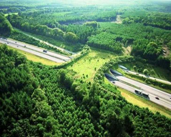 a50-netherlands-animal-bridge-wildlife-crossing-overpass