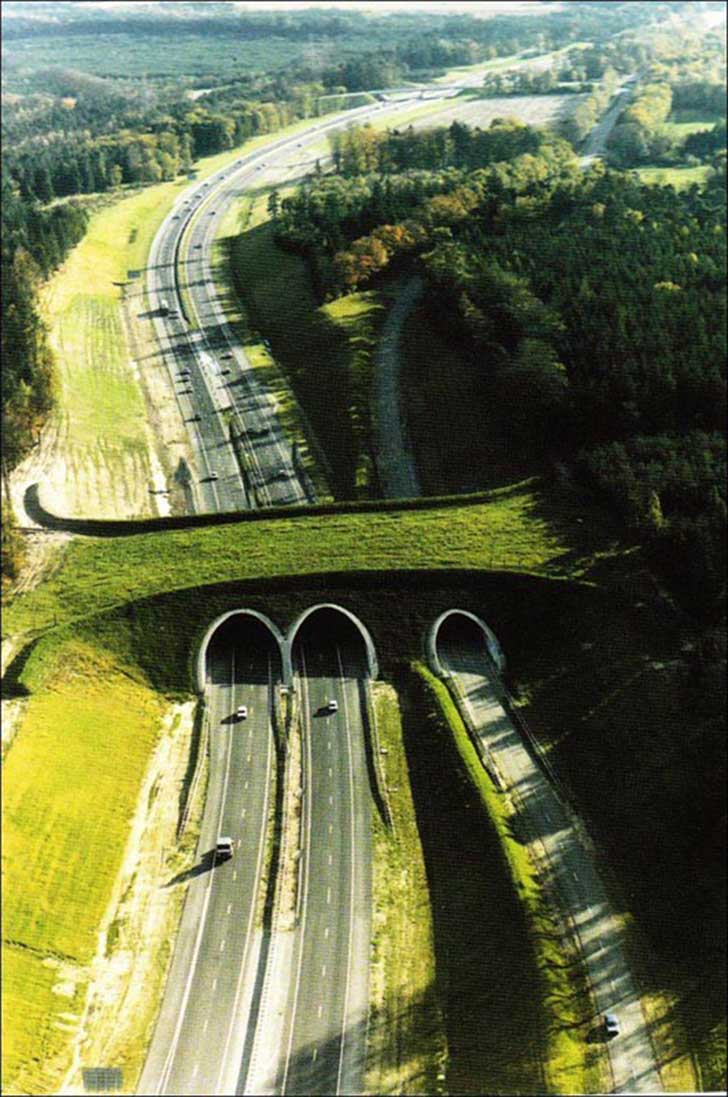 ecoduct-in-the-netherlands-animal-bridge-overpass-wildlife-crossing