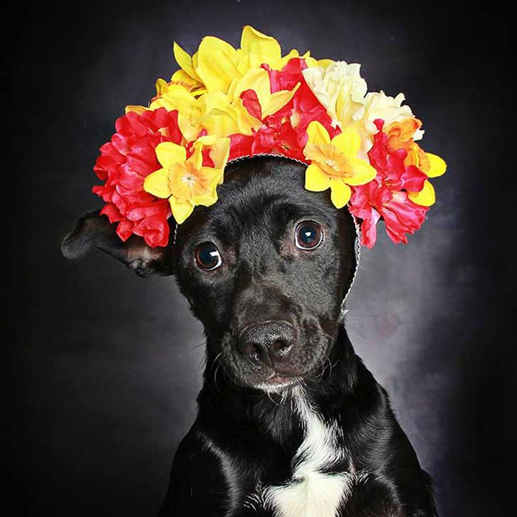 black-dog-portraits-floral-crown-guinnevere-shuster-8-1