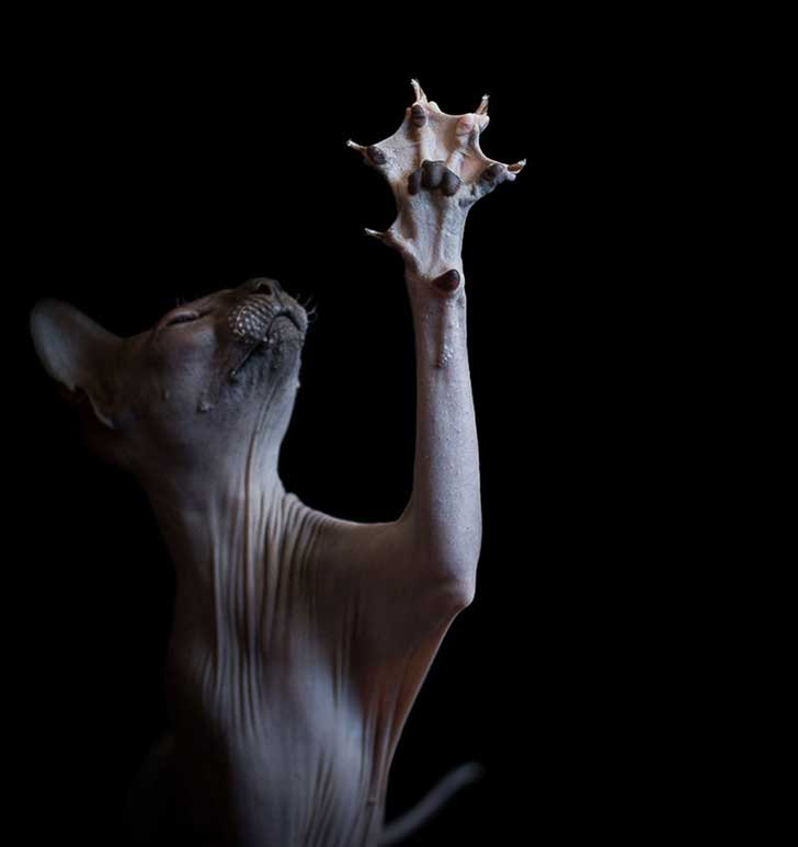 sphynx-cat-photography-alicia-rius-13