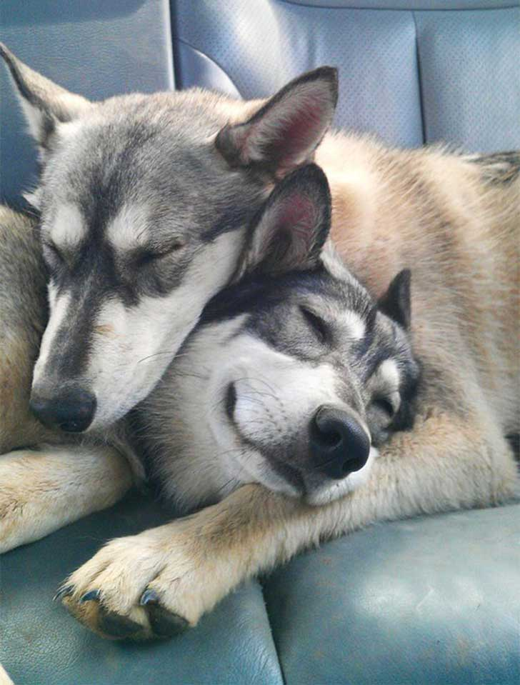 dog-best-friends-18__605