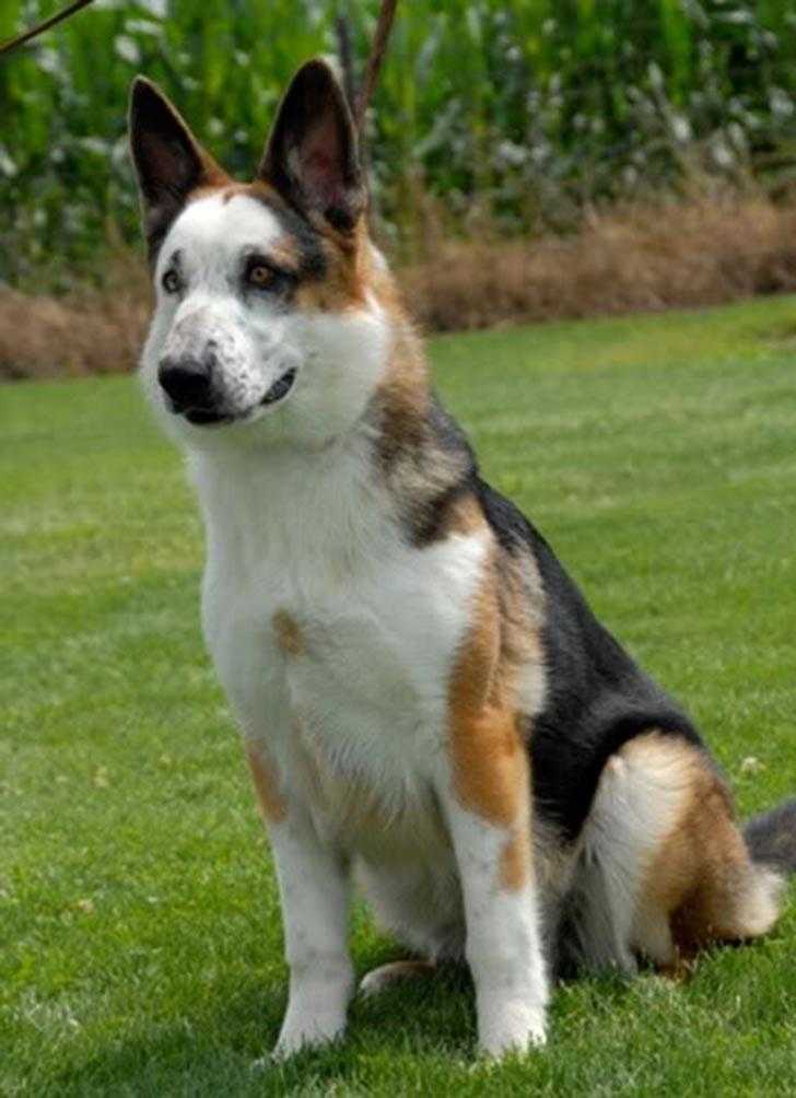 dog-coat-41